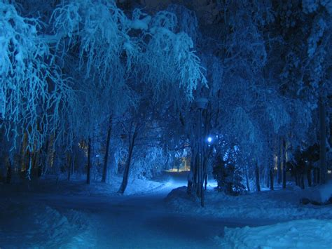 Free Images : tree, forest, branch, cold, winter, night
