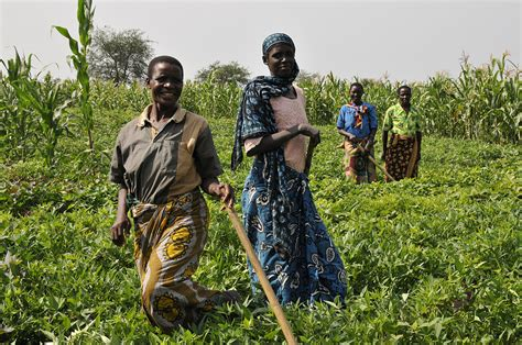 Conservation Agriculture Good for Development