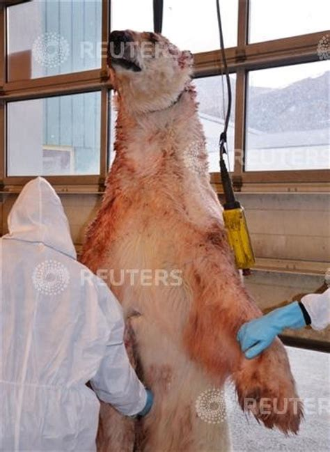 Shocking Pictures from the Polar Bear Attack in Norway
