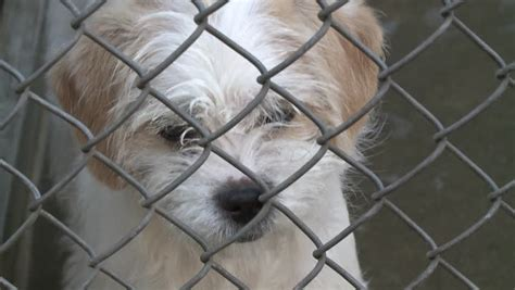 Sad Puppy Dog In Shelter Behind Fence Depressed In Slow
