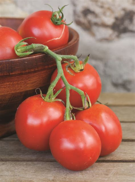 All About Growing Tomatoes - FineGardening