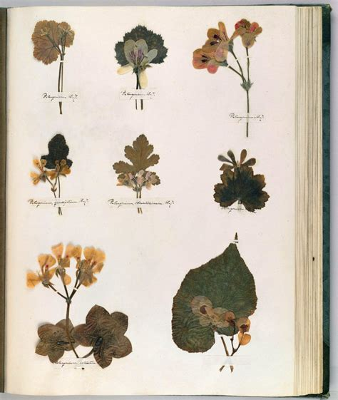 Botanical Drawing Technique: Composition and Emily