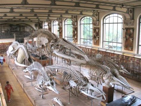 The National Museum of Natural History - Tourism & Holiday