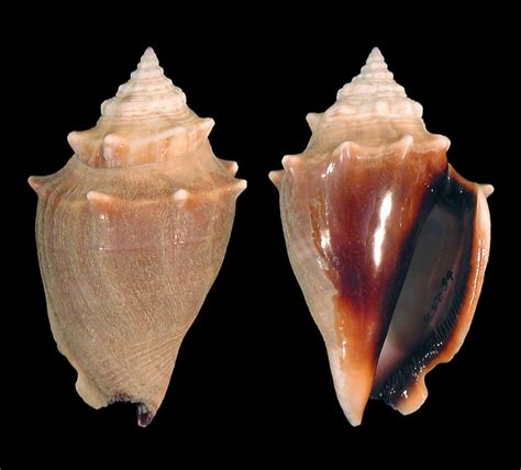 The Ultimate Guide to Finding Shells, Sharks Teeth, and